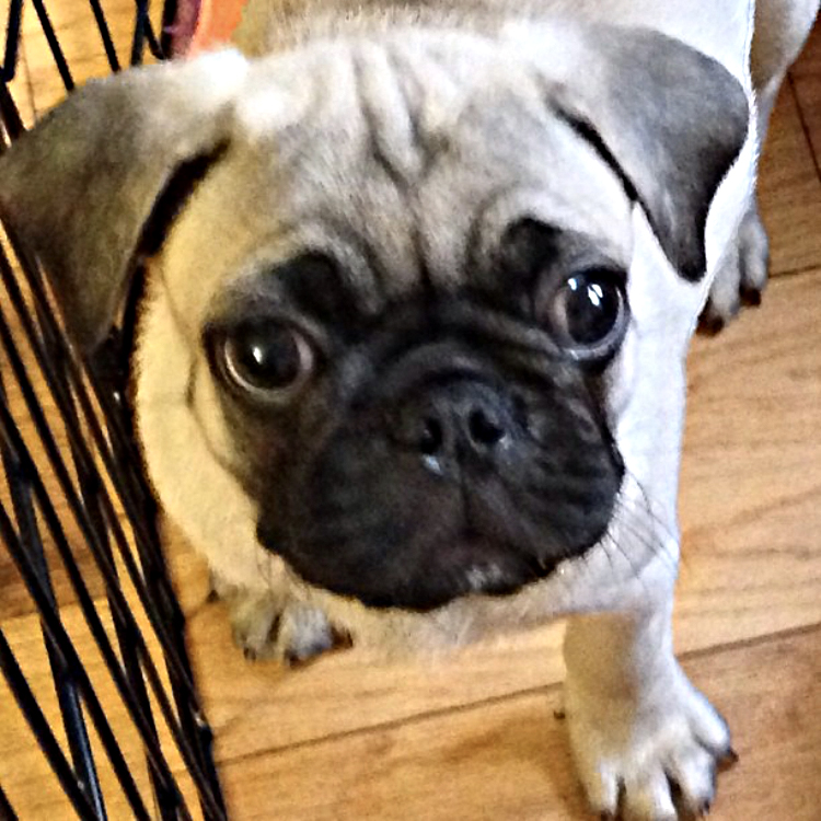 Ari puppy pic3 copy.jpg
