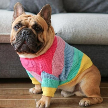rainbow-honeyidressedthepug 1.jpg