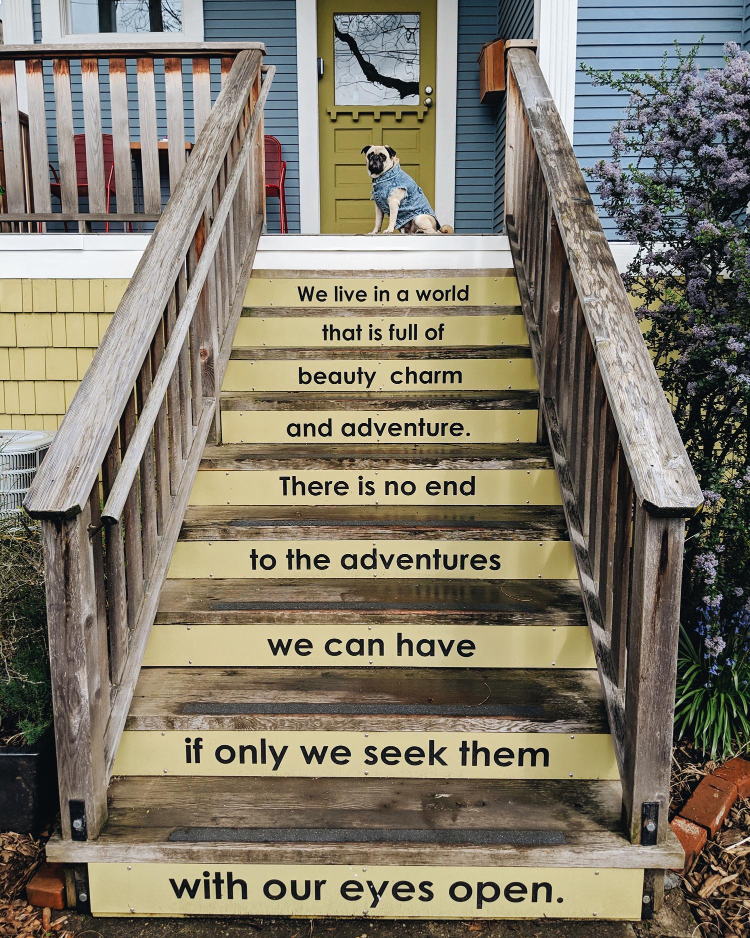 Portland-dogfriendly-travel-travelwithyourdog-woodenshoetulipfestival-2019-dogstraveling-dogblog-pug-dogmomblog-newyorkblog-visitportland5.jpg