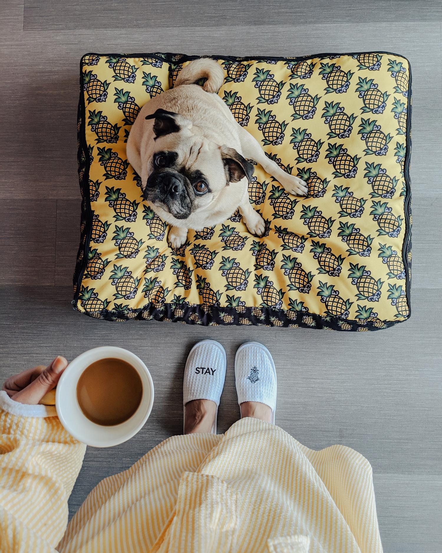 Portland-dogfriendly-travel-travelwithyourdog-woodenshoetulipfestival-2019-dogstraveling-dogblog-pug-dogmomblog-newyorkblog-visitportland20.jpg