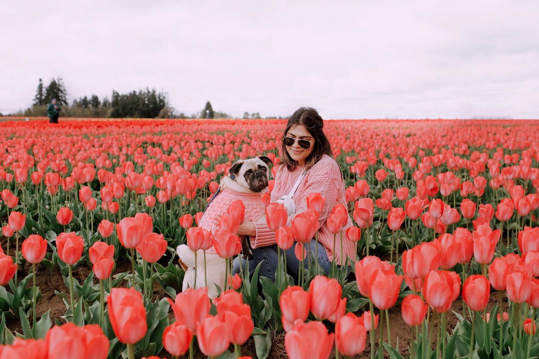 Portland-dogfriendly-travel-travelwithyourdog-woodenshoetulipfestival-2019-dogstraveling-dogblog-pug-dogmomblog-newyorkblog-visitportland22.jpg