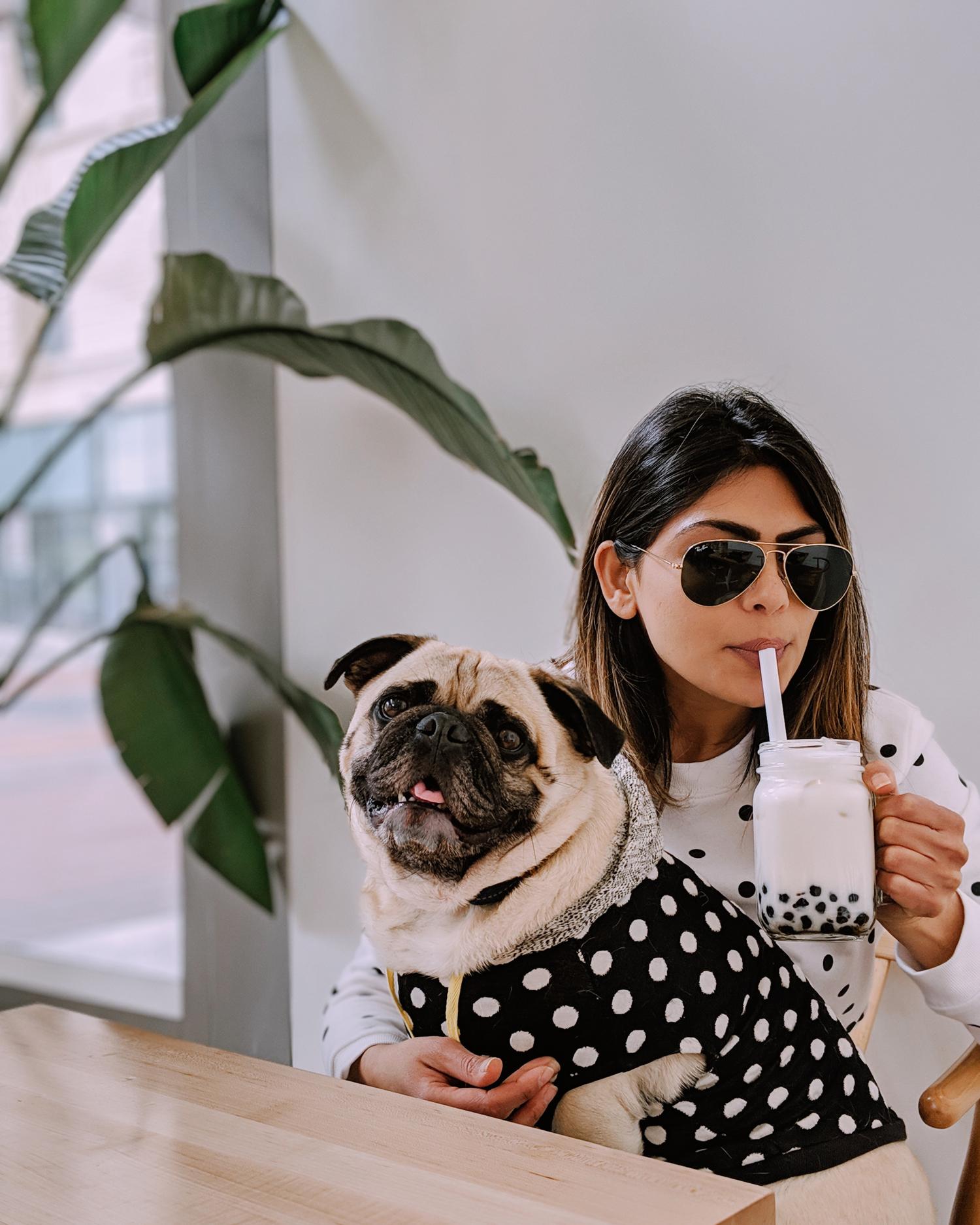 Portland-dogfriendly-travel-travelwithyourdog-woodenshoetulipfestival-2019-dogstraveling-dogblog-pug-dogmomblog-newyorkblog-visitportland33.JPG