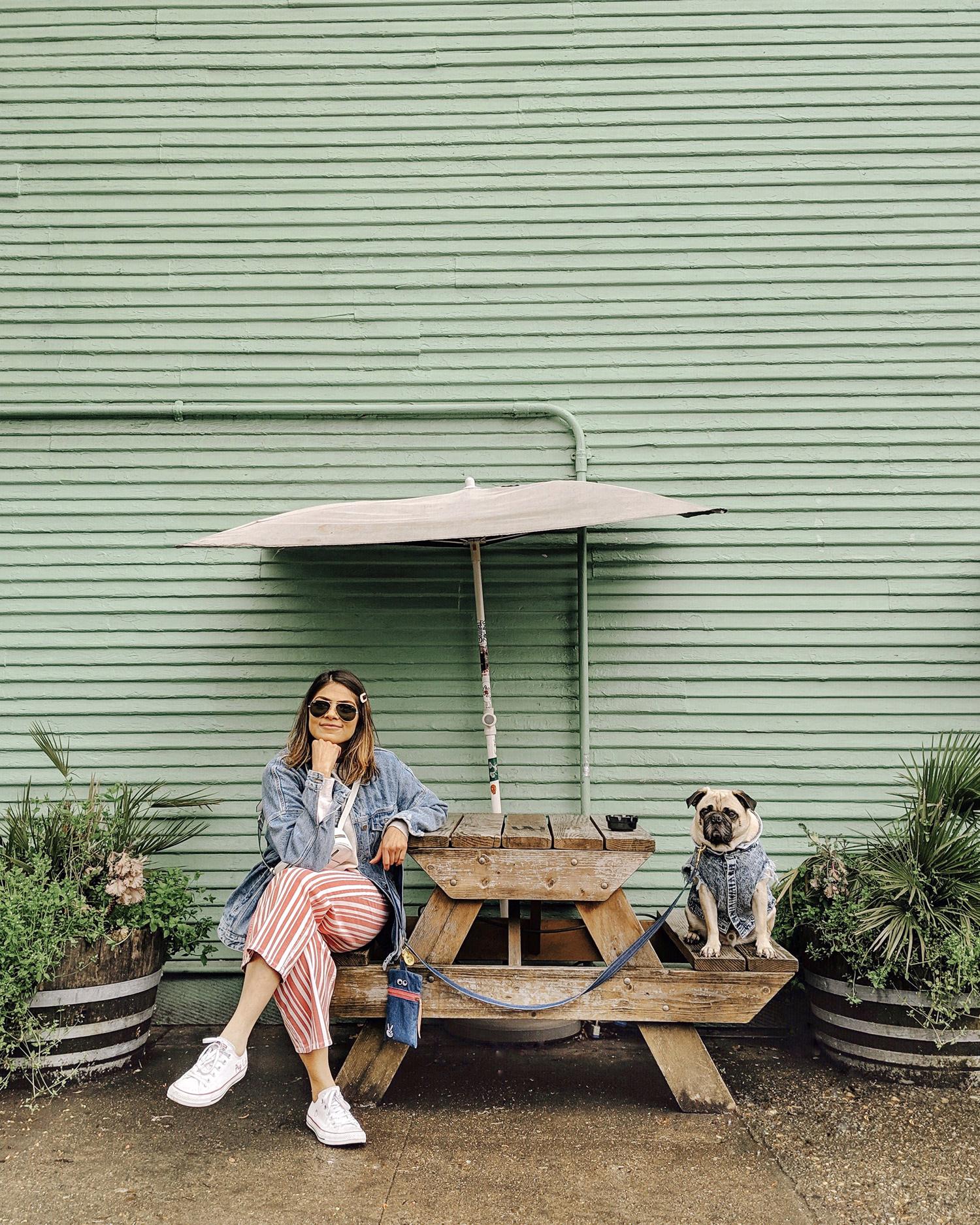 Portland-dogfriendly-travel-travelwithyourdog-woodenshoetulipfestival-2019-dogstraveling-dogblog-pug-dogmomblog-newyorkblog-visitportland23.jpg