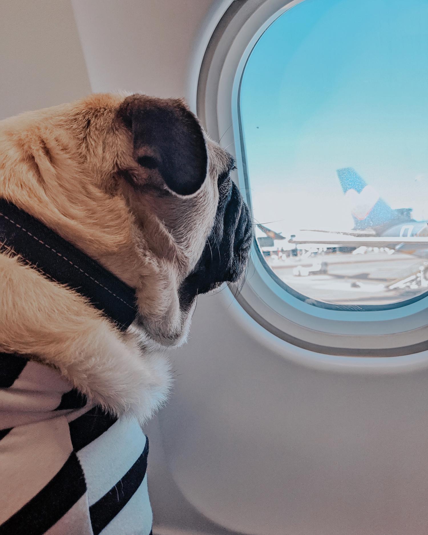 international-travel-with-dog-paris-uk-from-us-dogfriendly-travel.JPG