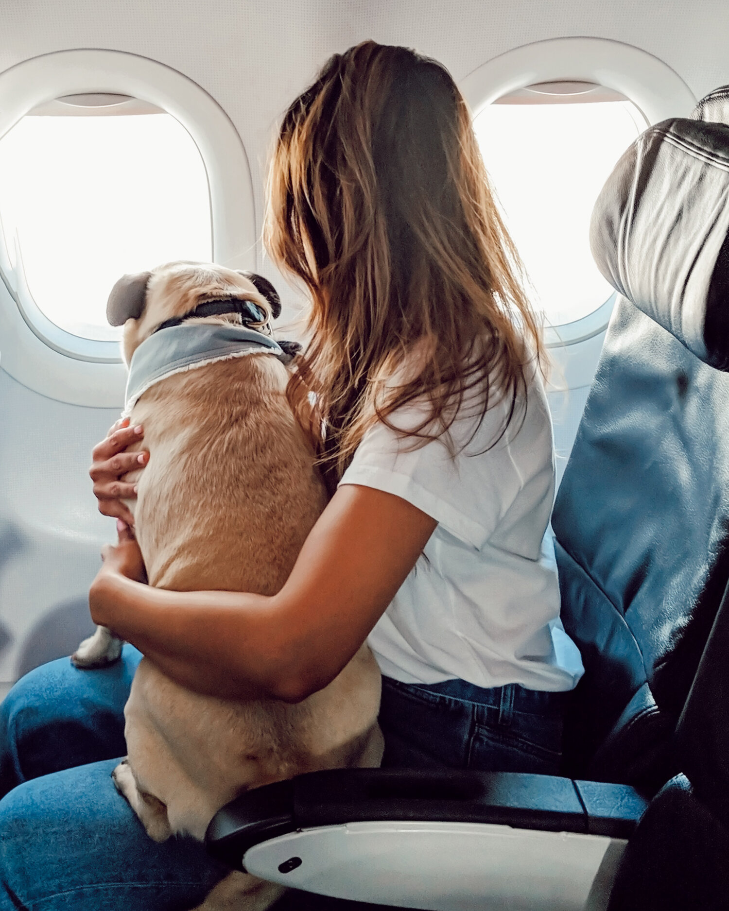 Travel with your dog-US to UK via France - A step-by-step simplified guide to travel with your dog from US to UK via France.