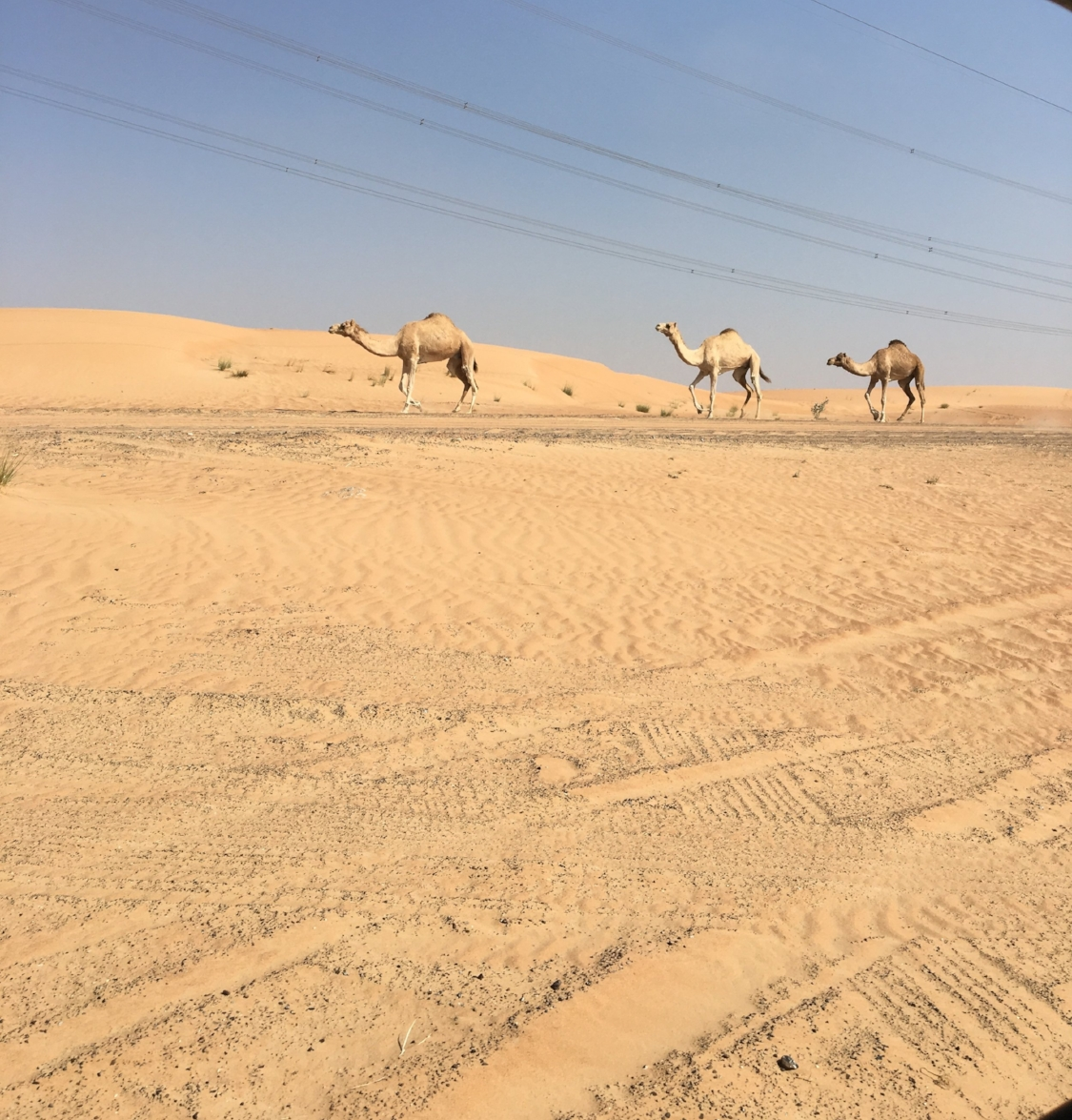 we even caught a glimpse of some camels on our ride