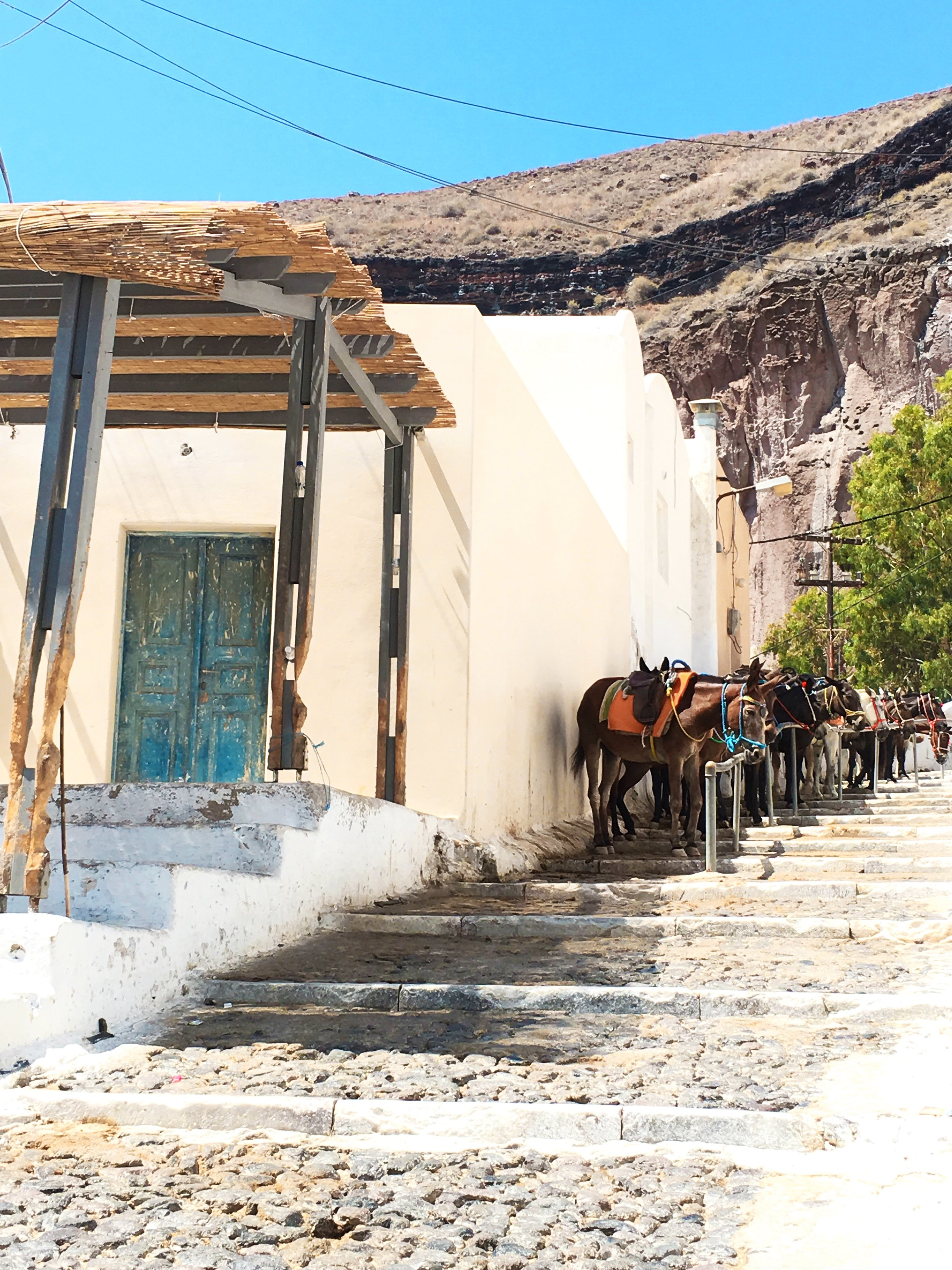 The donkeys waiting to take you up in Thira