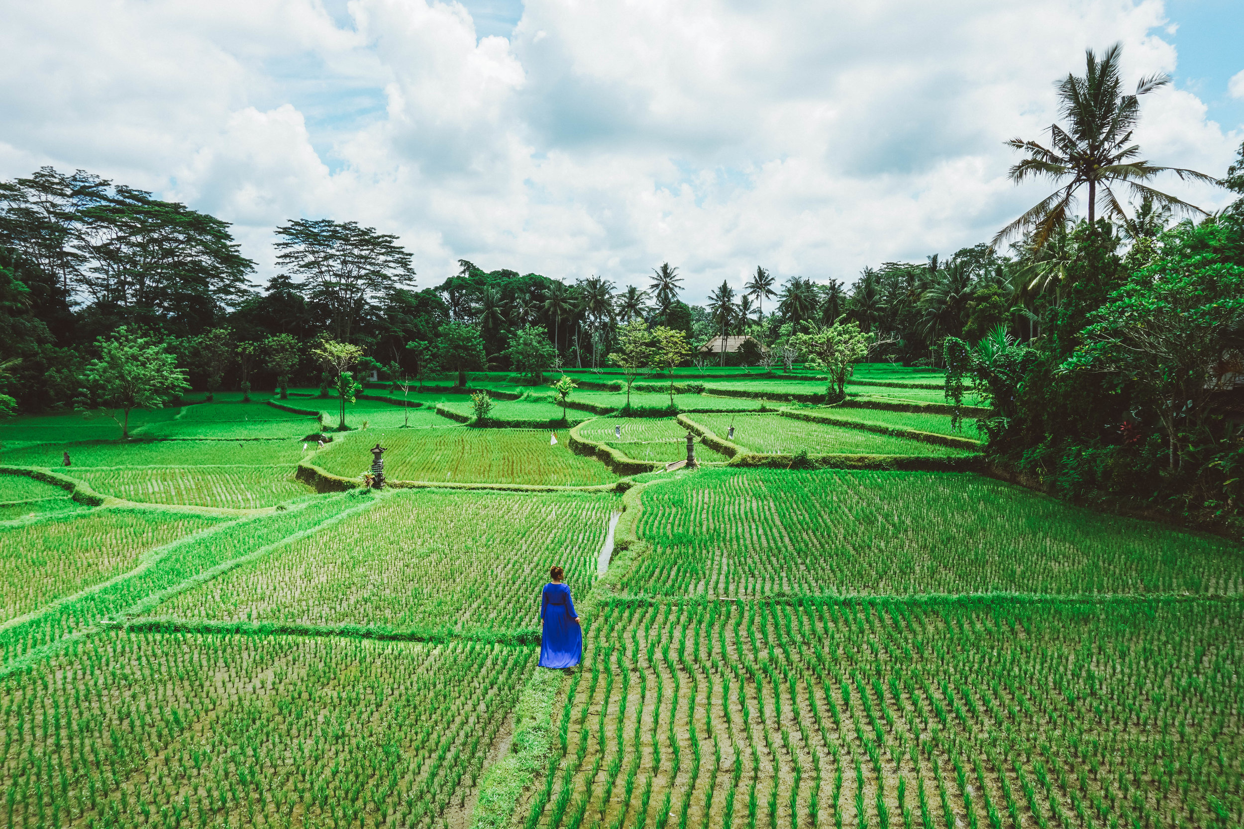 Rice Terrace at The Shala