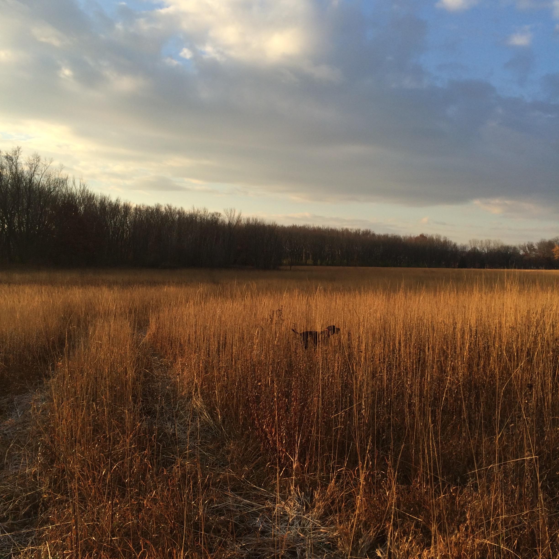 Jim Mackenzie's Rase vom Beaver Creek (Deutsch Kurzhaar)