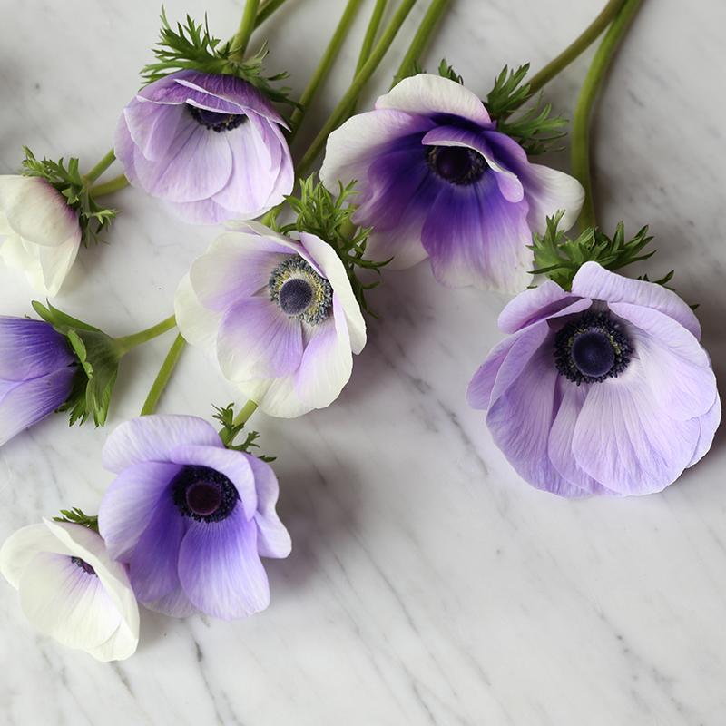anemone_hilaryhorvathflowers_