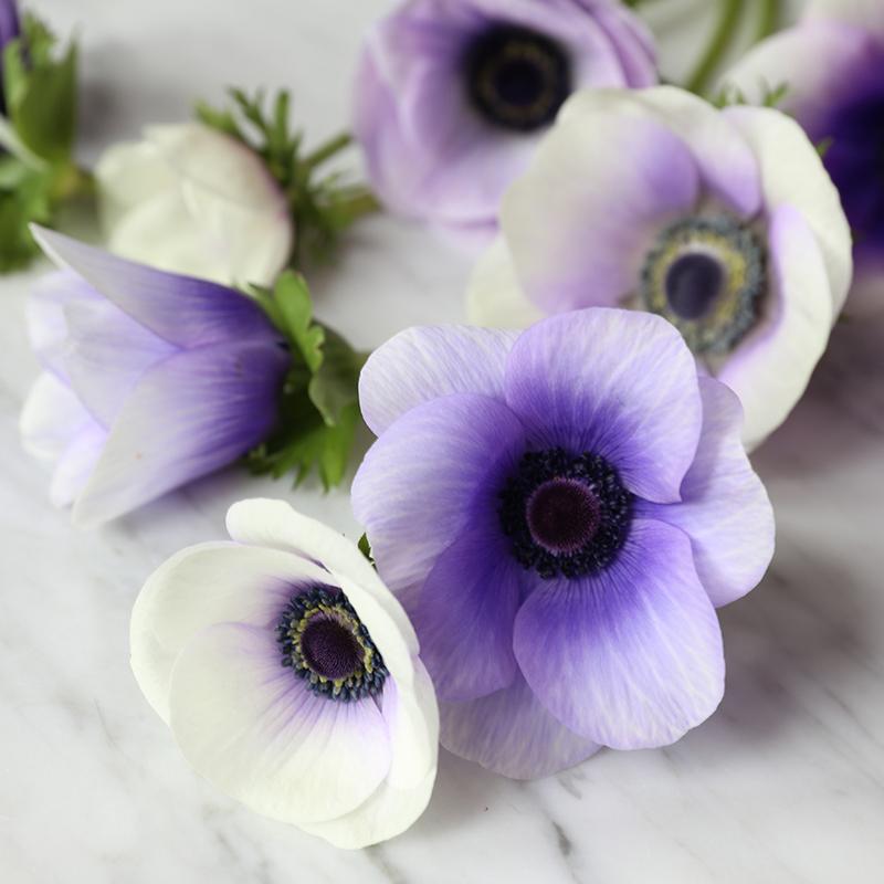 hilaryhorvathflowers_anemone