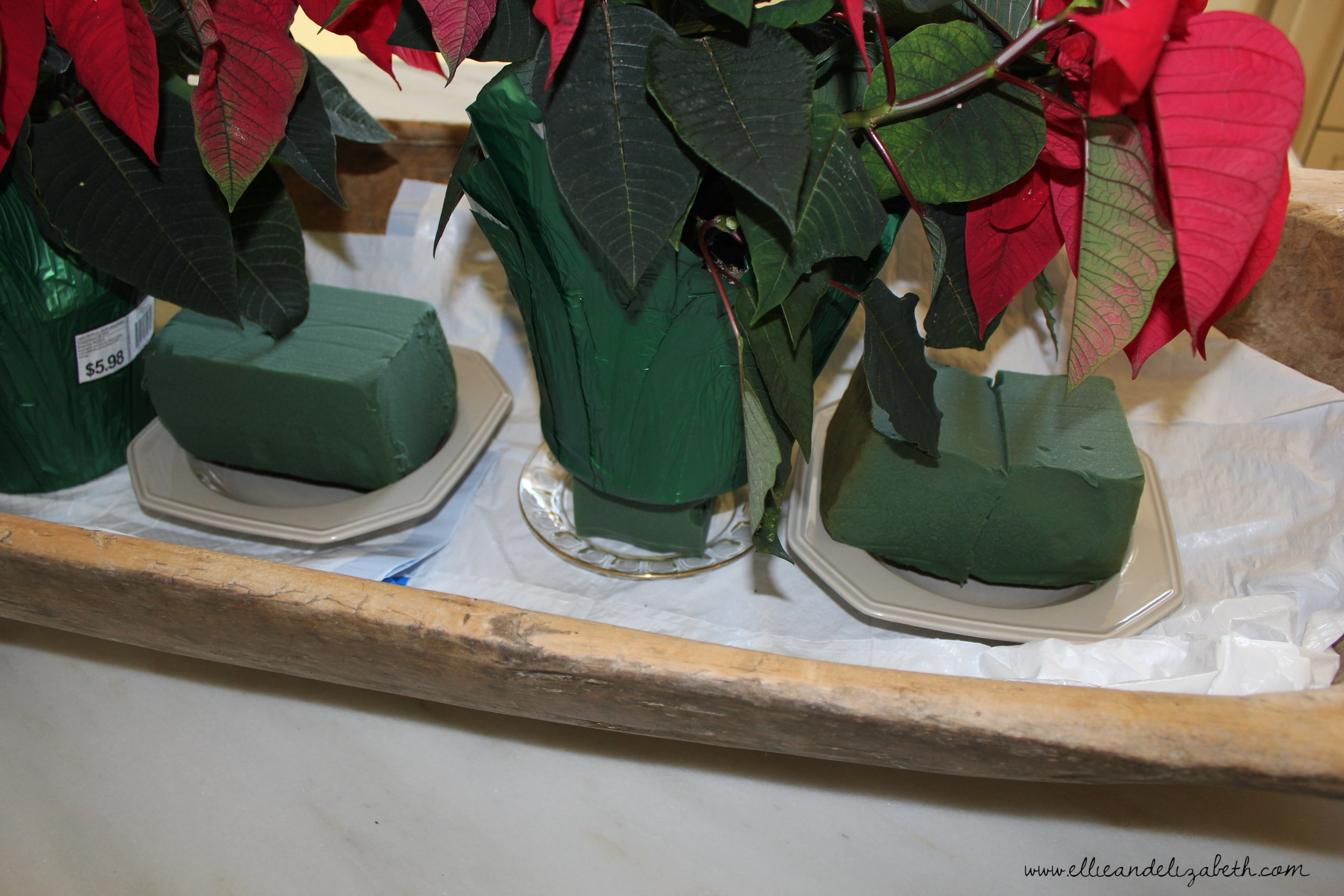 I used a foam brick under one poinsettia to make the plants the same height.