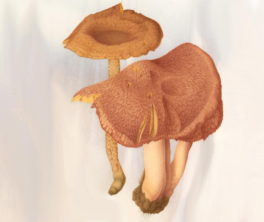 Fungi 07.jpg
