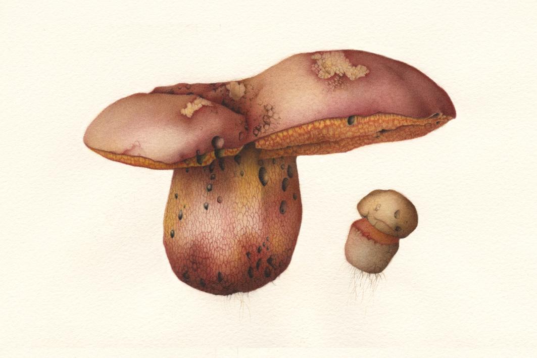 Mushroom 02.jpg