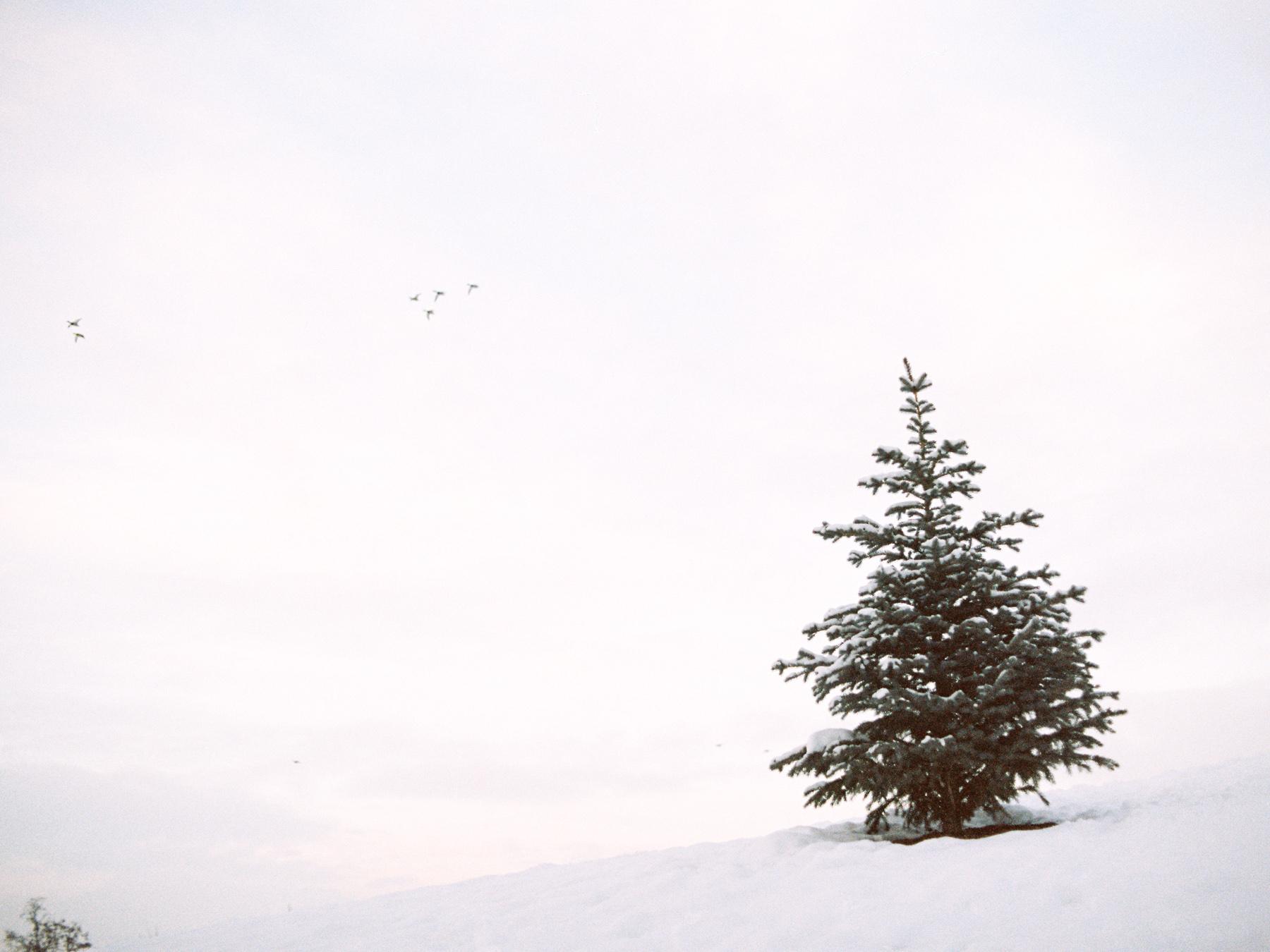 Ben+Joella | Winter on Film 12.jpg