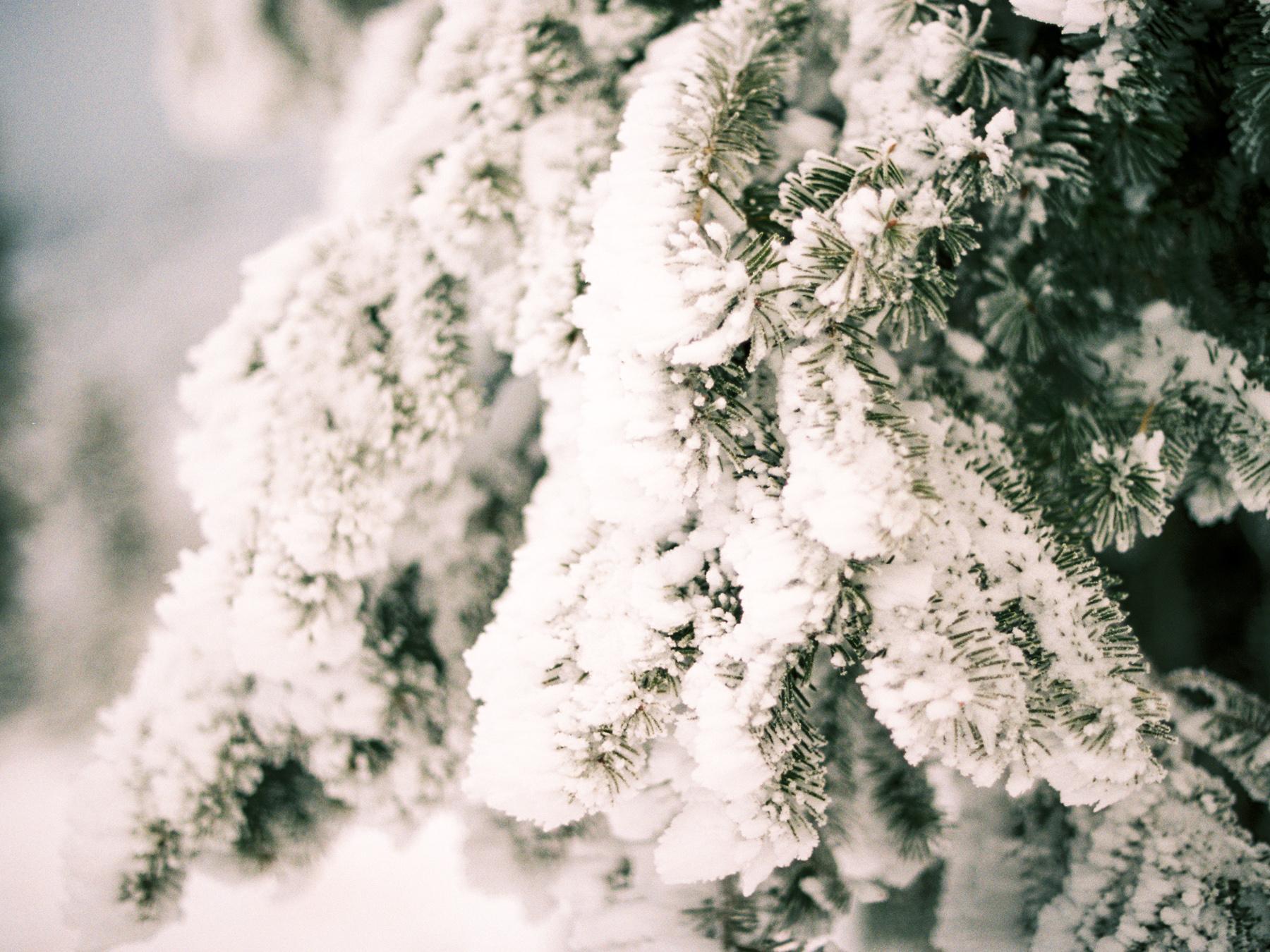 Ben+Joella | Winter on Film 16.jpg