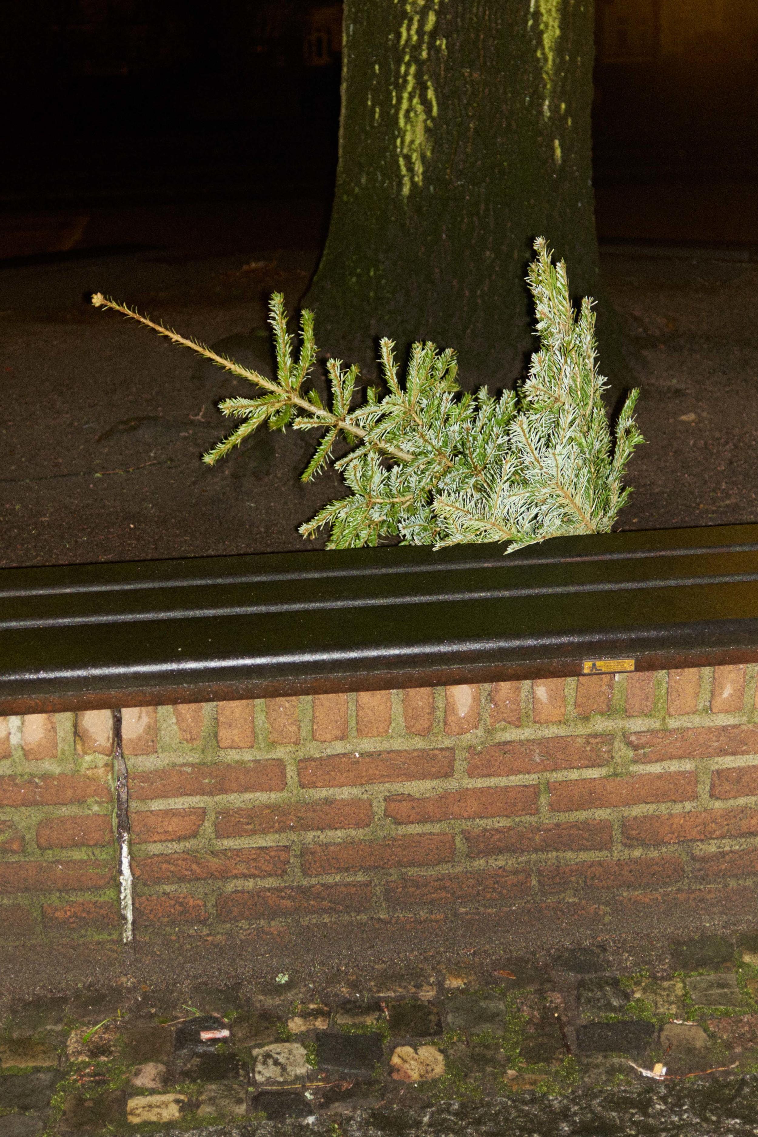 Weihnachtsbaum_15-01-12_DSF3404.jpg