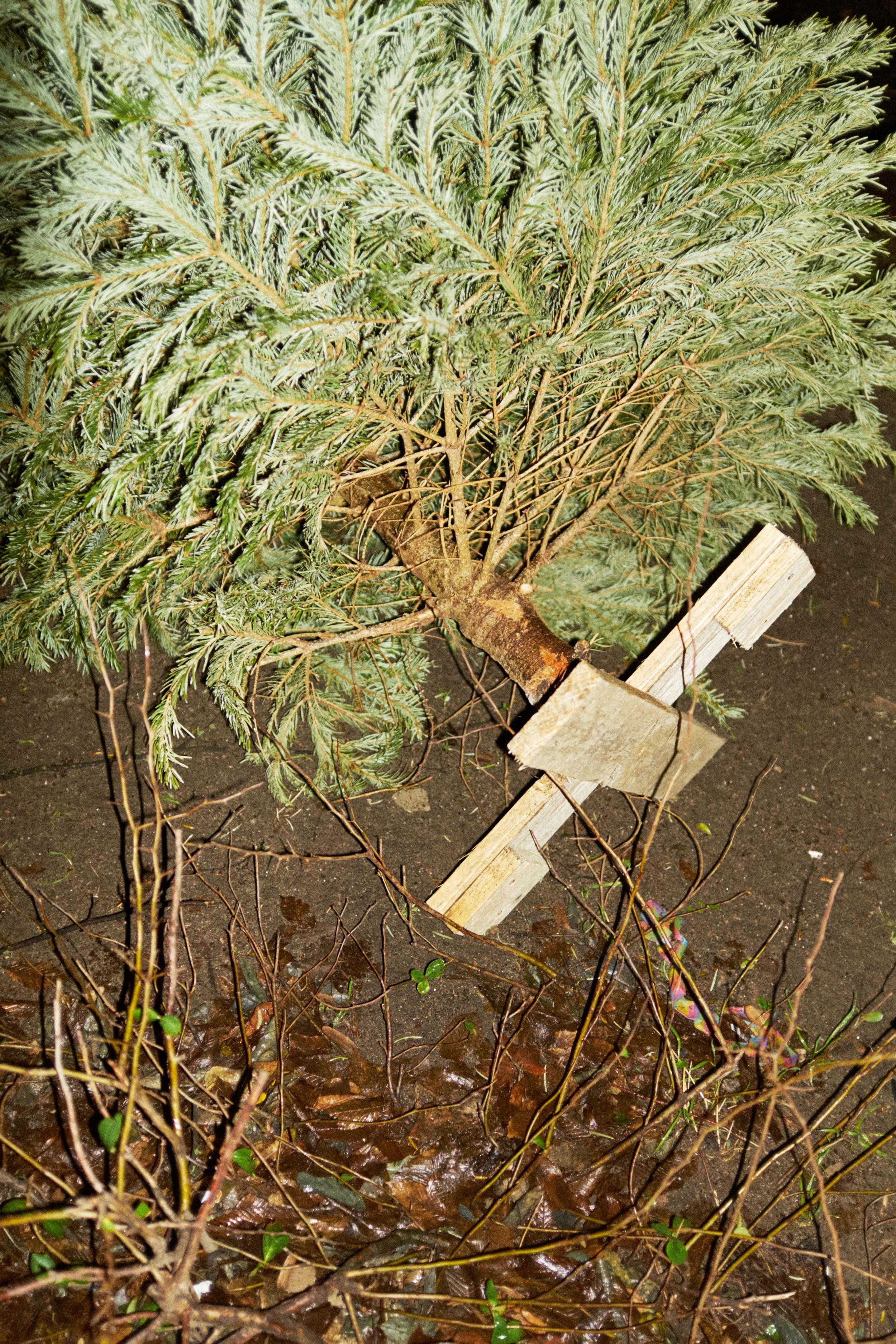 Weihnachtsbaum_15-01-12_DSF3512.jpg