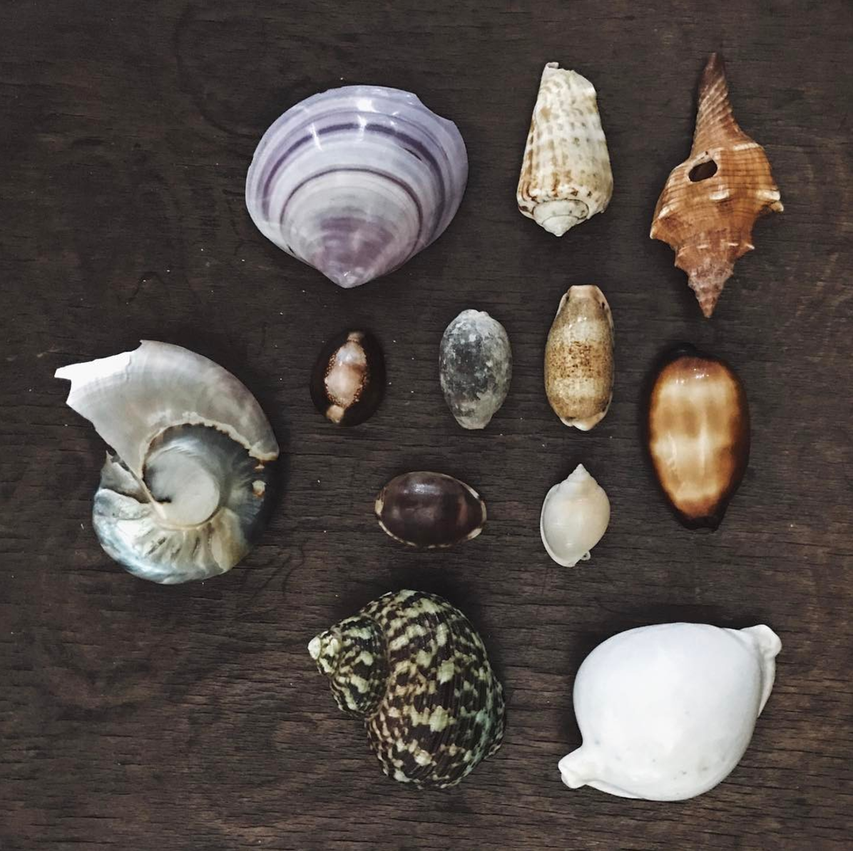 """ hurricanite My gorgeous shells collection 🐚  #techdoppkit   @thisisground """