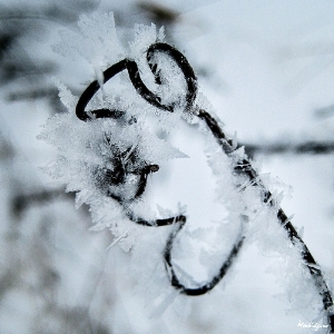 winter art.jpg
