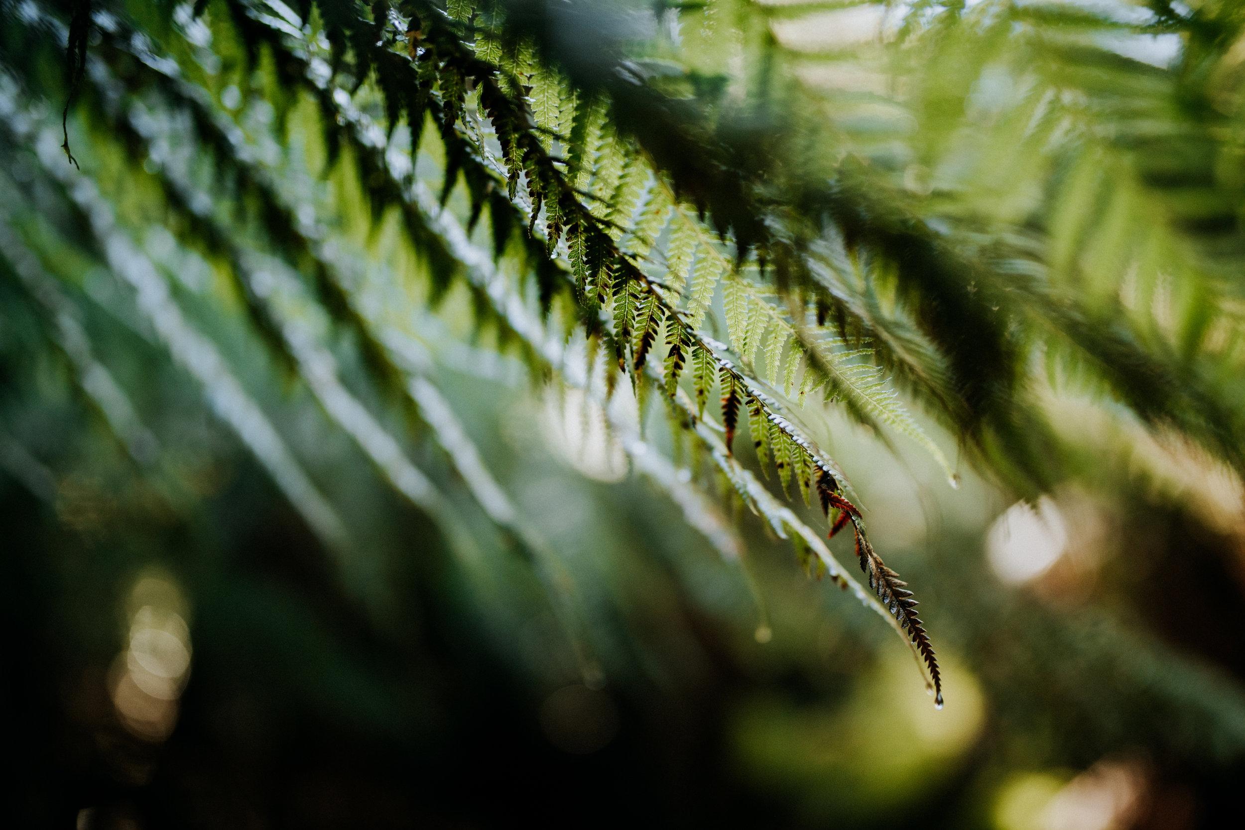 Old Growth Forest, Tasmania Australia