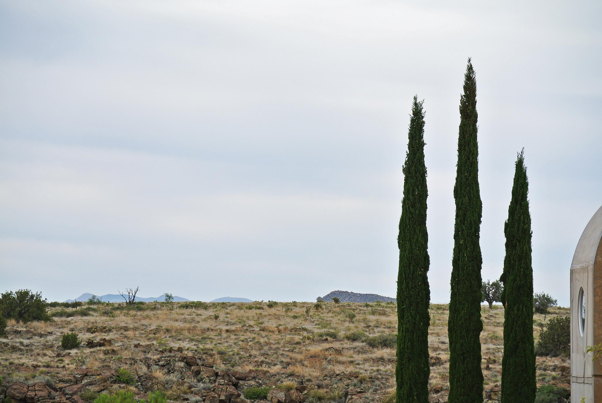 Italian Juniper trees at Arcosanti  © Shannon Moore