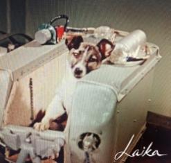 Laika-the-Soviet-Space-dog-1957.jpg