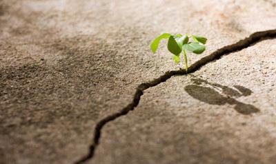 plant-growing-through-concrete.jpg