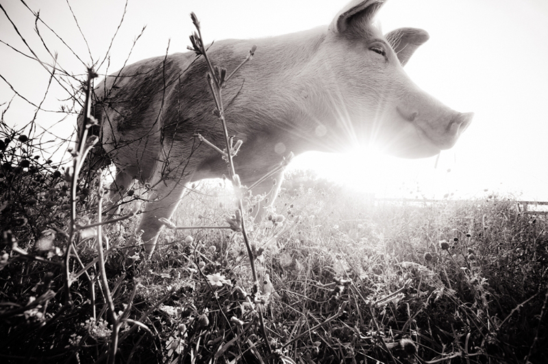 Photograph by Jo-Anne McArthur / We Animals