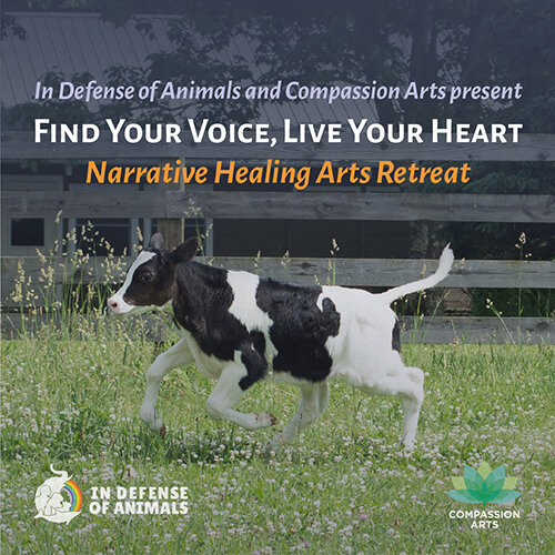 Narrative Healing Arts Retreat October 5th and 6th.jpg