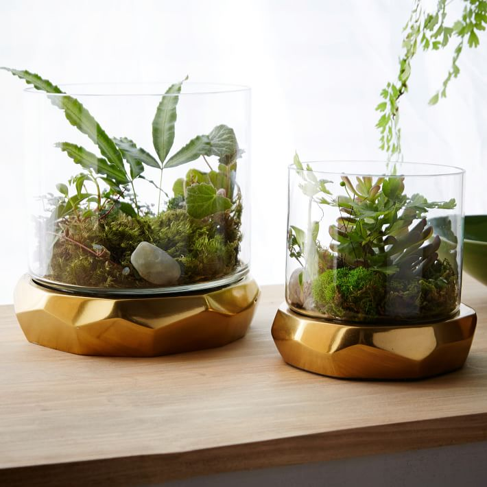 roar-rabbit-freeform-terrariums-o.jpg