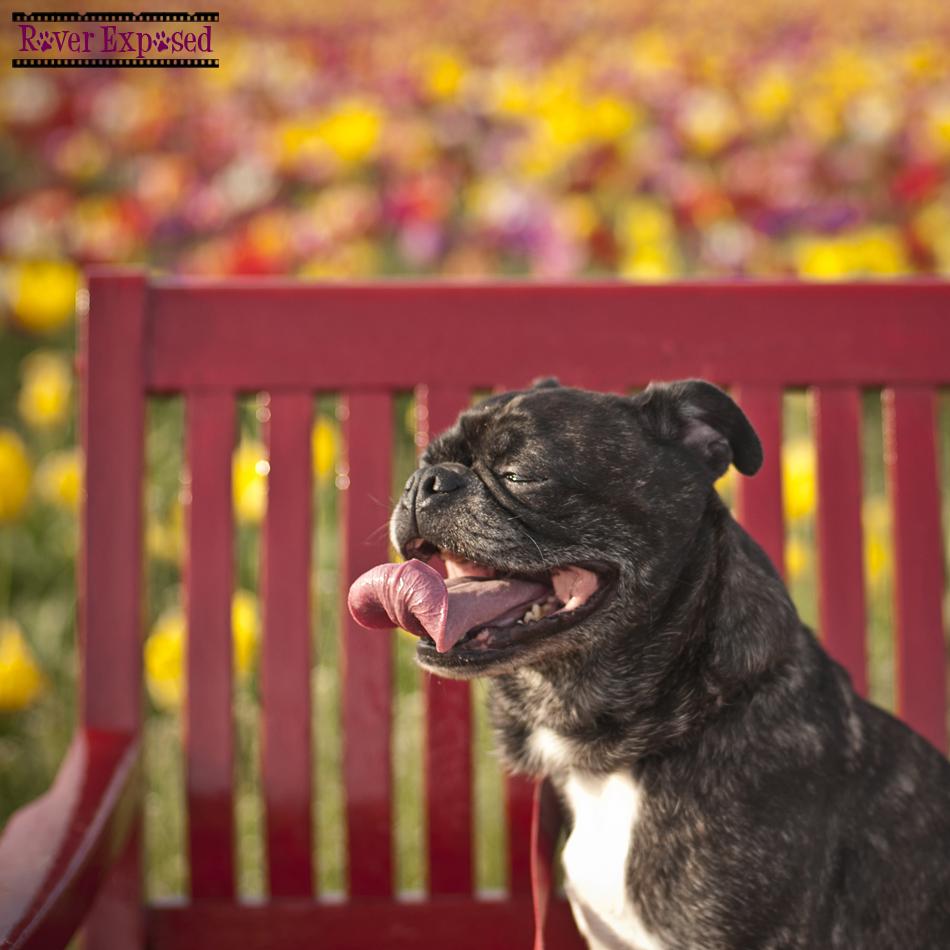 gromit-bench.jpg