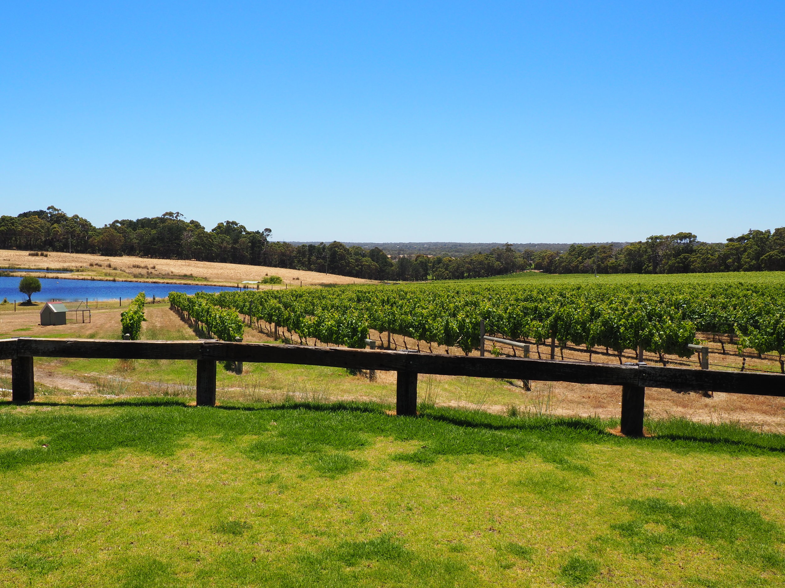 View of vineyard.JPG
