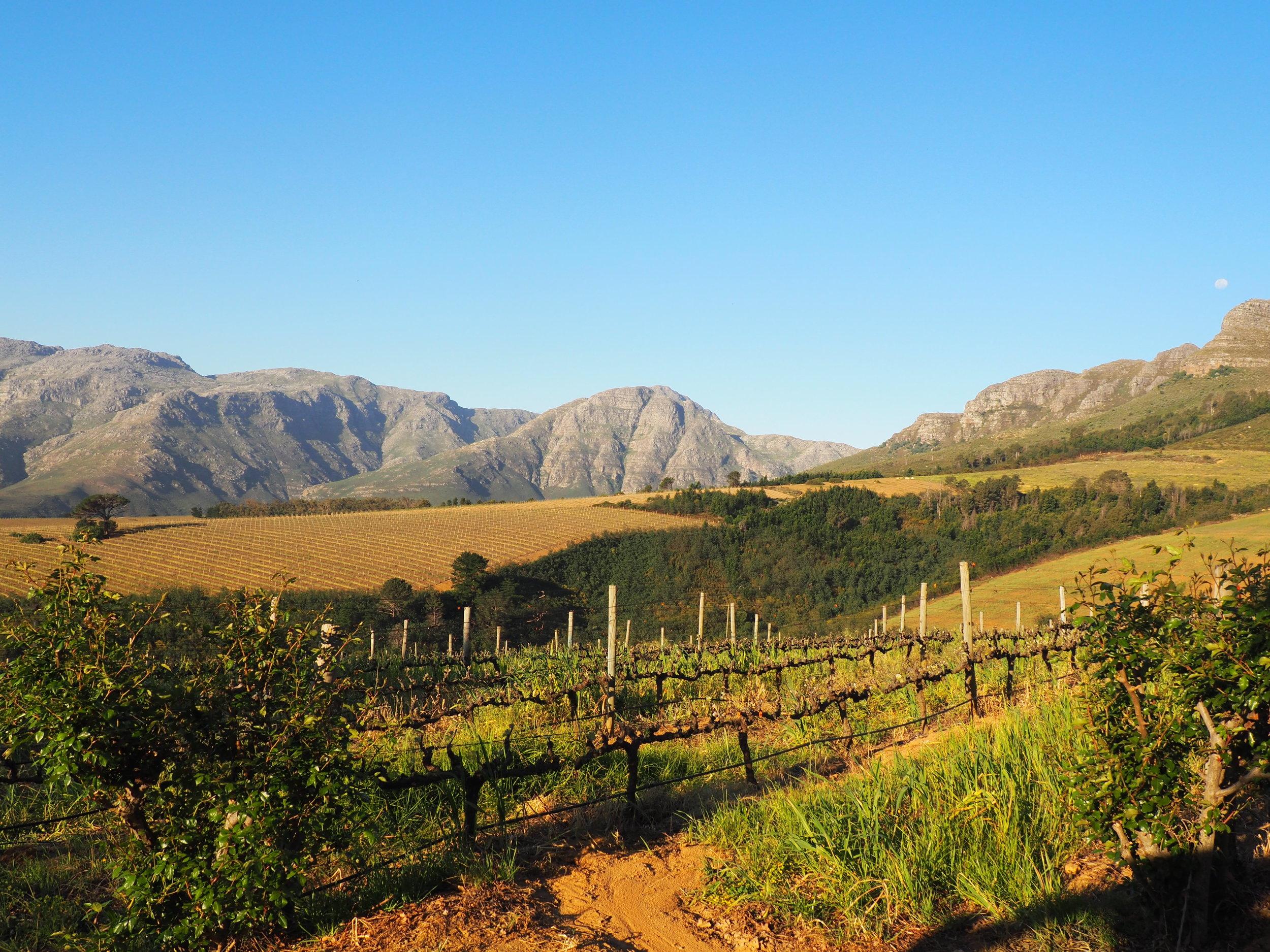 Hidden valley - vineyard.JPG