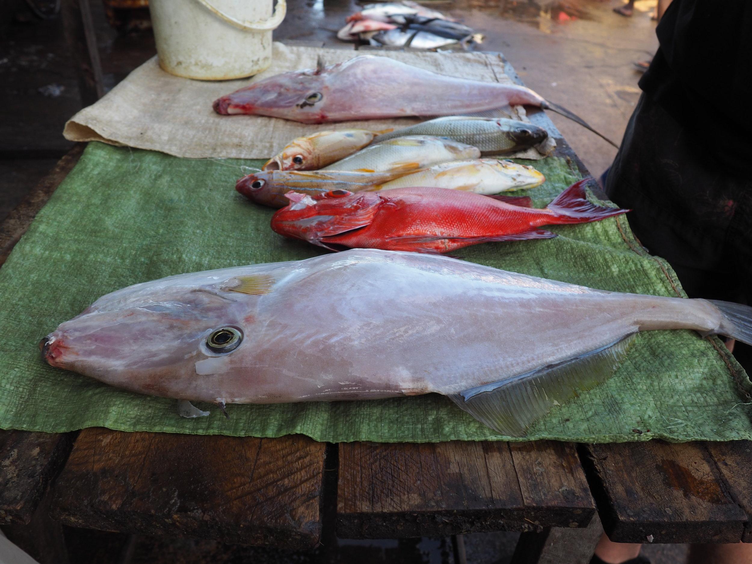 Nebombo fisk market - fish.JPG