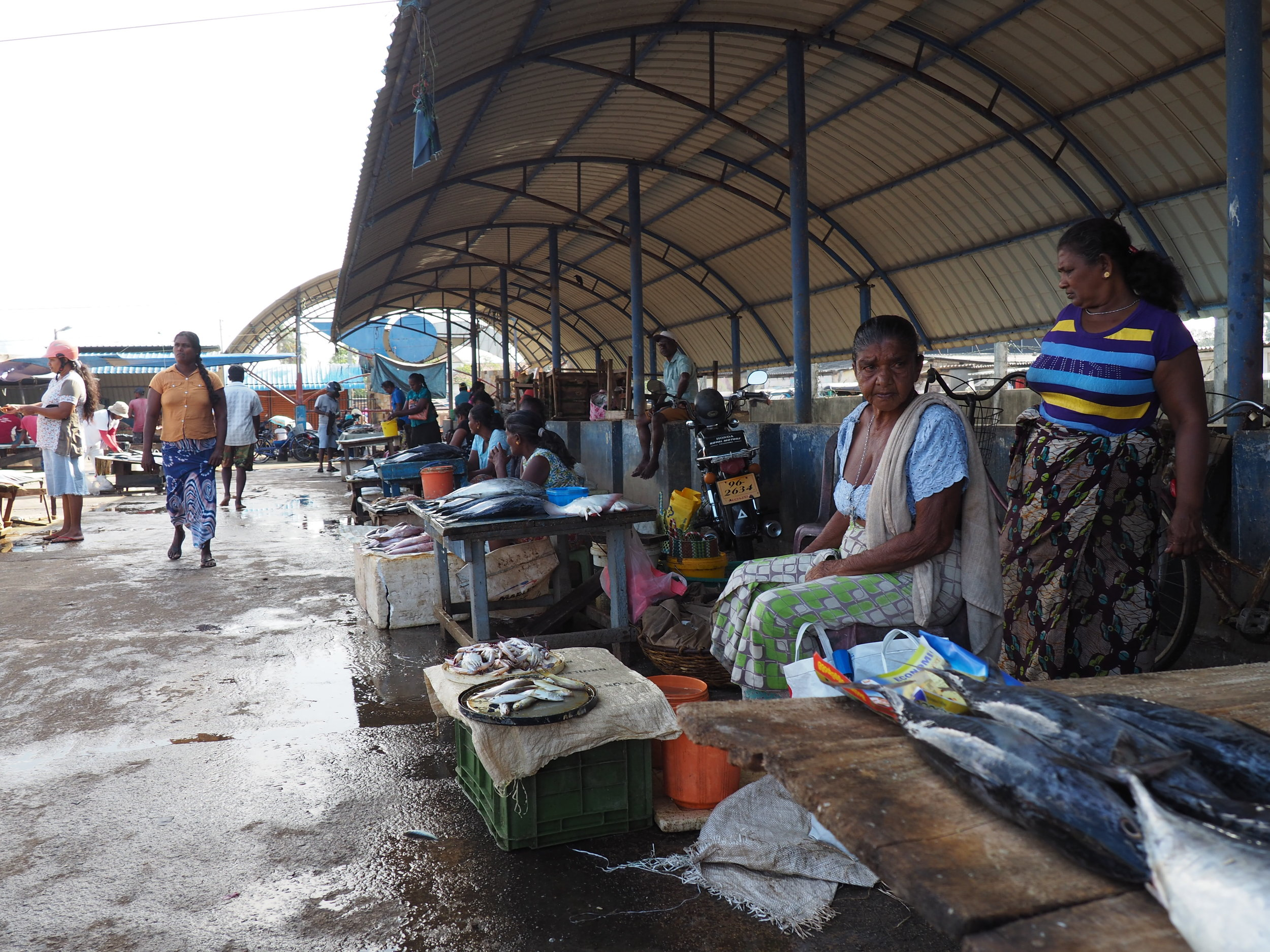 Negombo fish market stalls.JPG