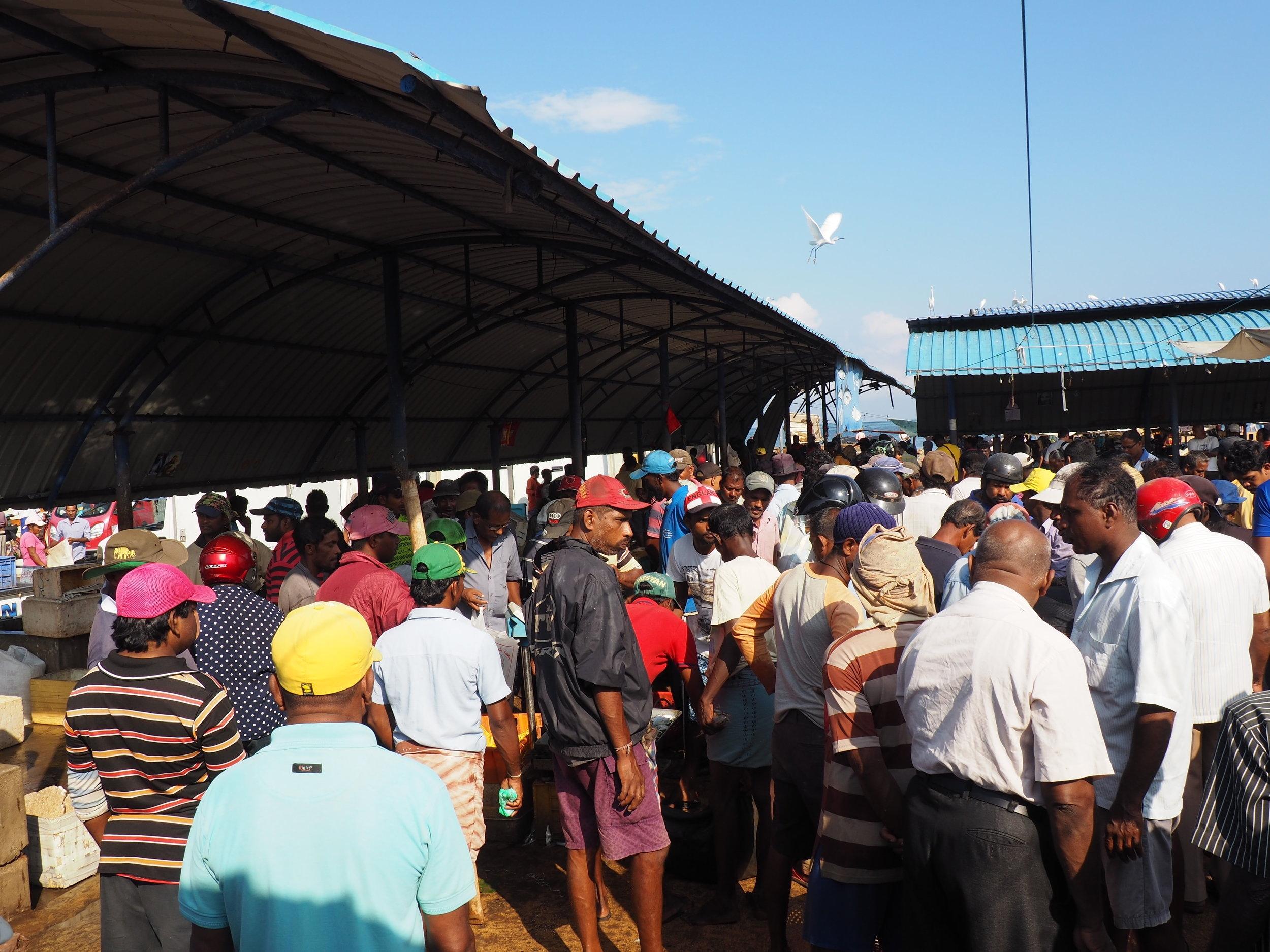 Negombo fish market crowd.JPG