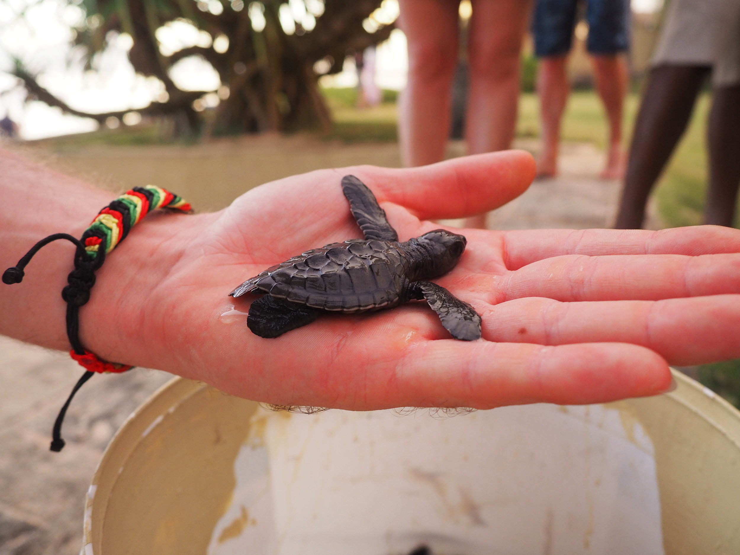 Fortress turtle hand.JPG