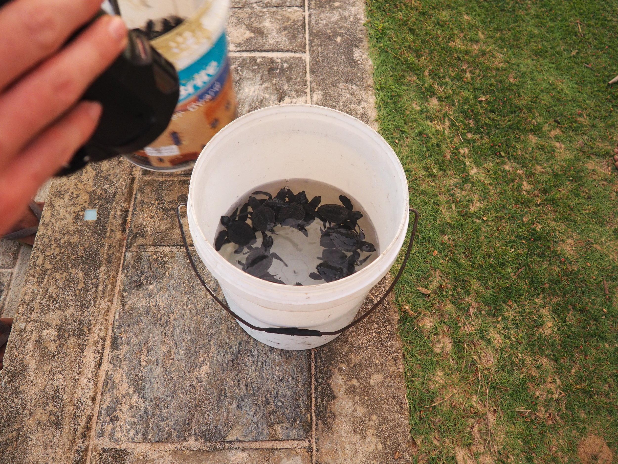 Fortress turtle bucket.JPG