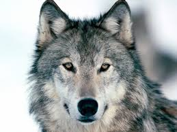 A lone wolf. Though you are still more likely to die in a bathtub than by terrorist attack.