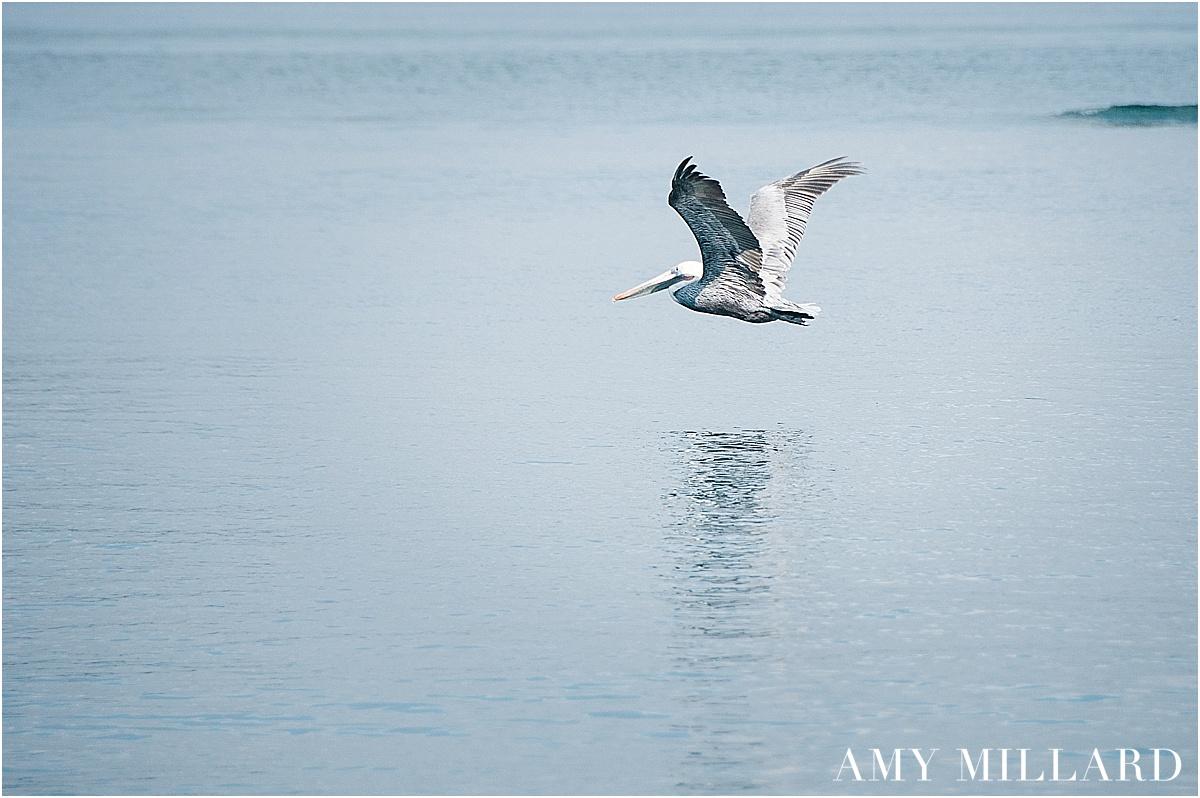 Amy Millard-11.jpg