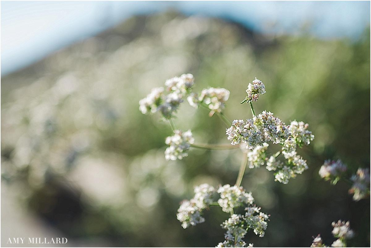 San Diego Photographer_0143.jpg