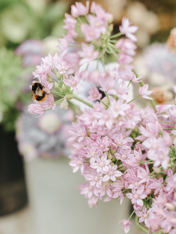 Yorkshire flowers