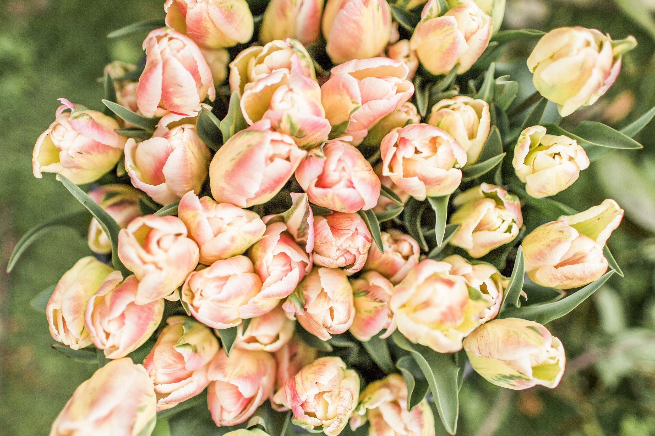 Fiona Look 2_Low_Res-24.jpg