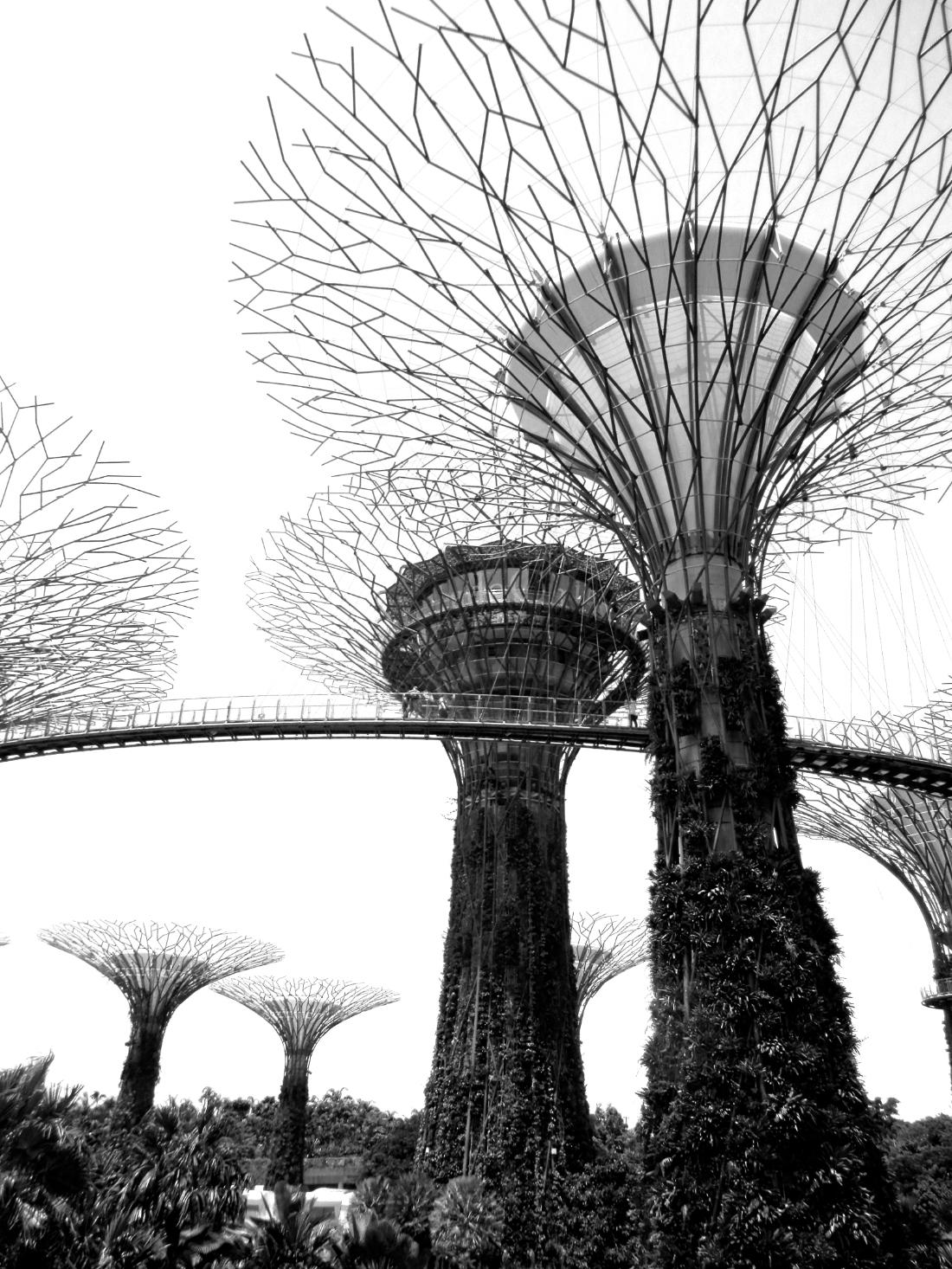 gardens of the bay singapore.jpg