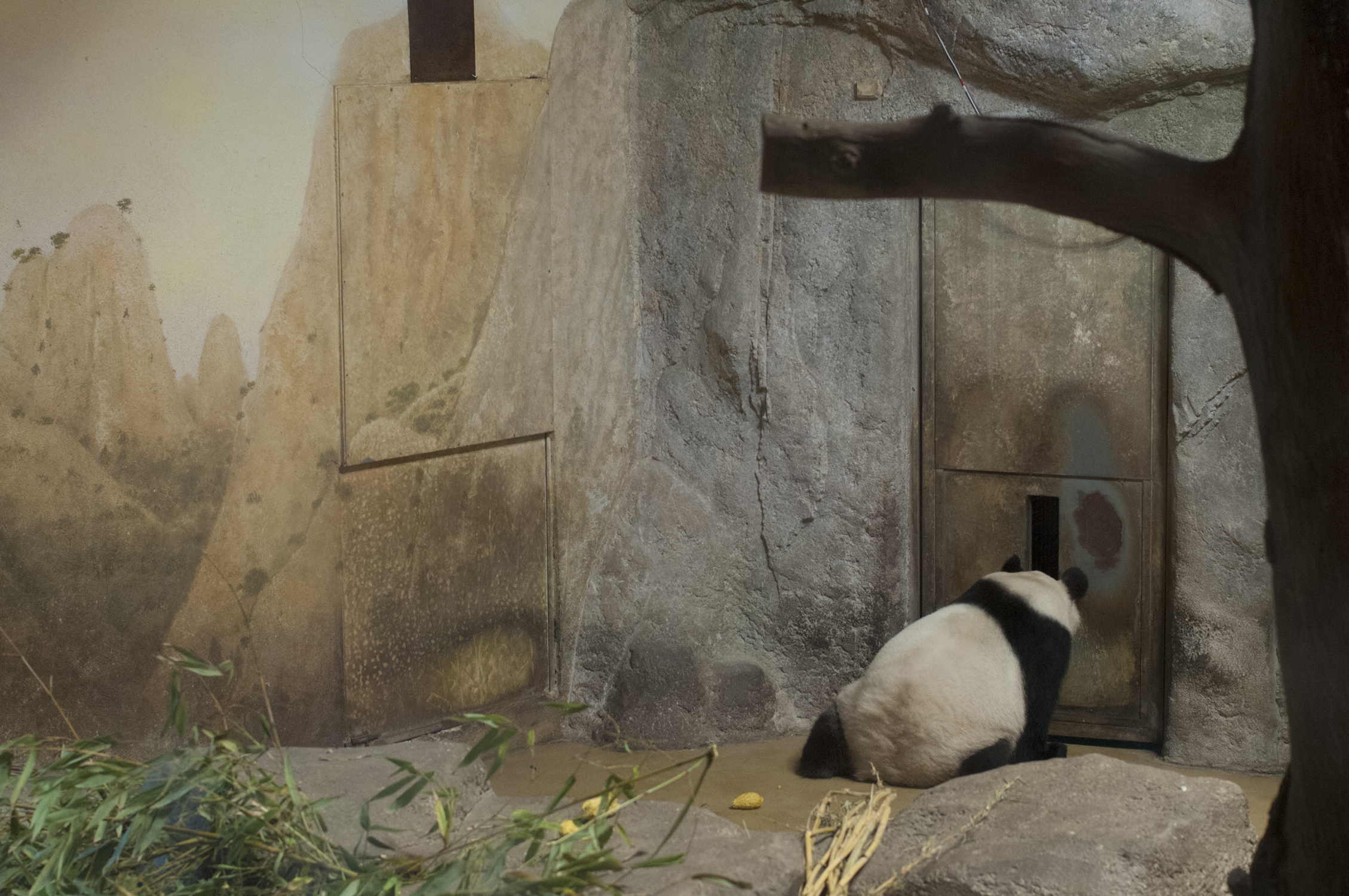 it-zoological-panda.jpg