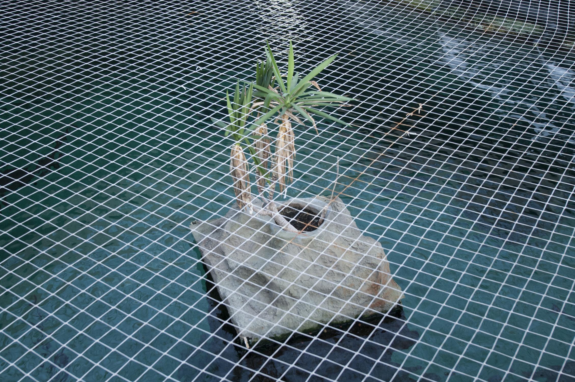 it-zoological-plant.jpg