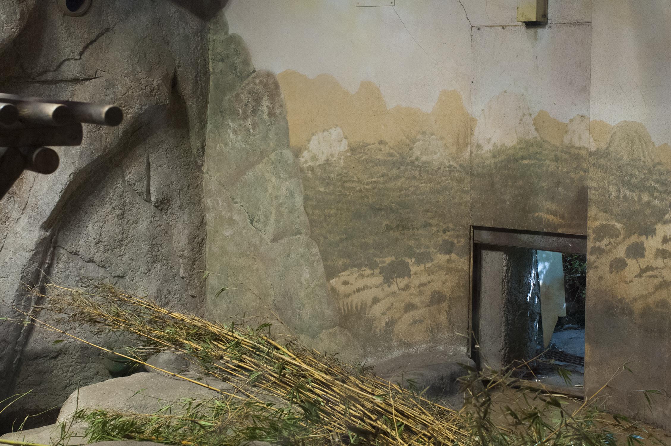 inge_trienekens-zoological-panda-website.jpg