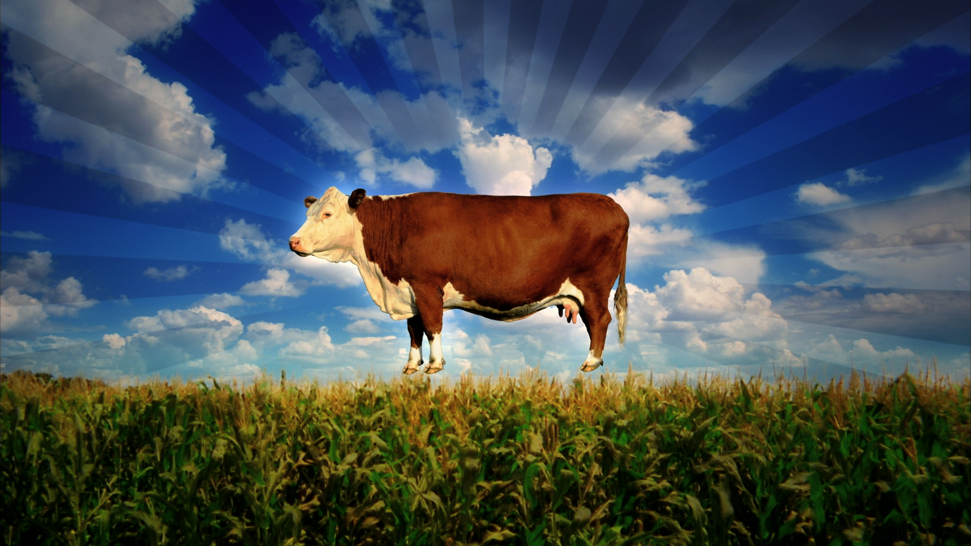 FOOD INC_Cow floating over corn.jpg