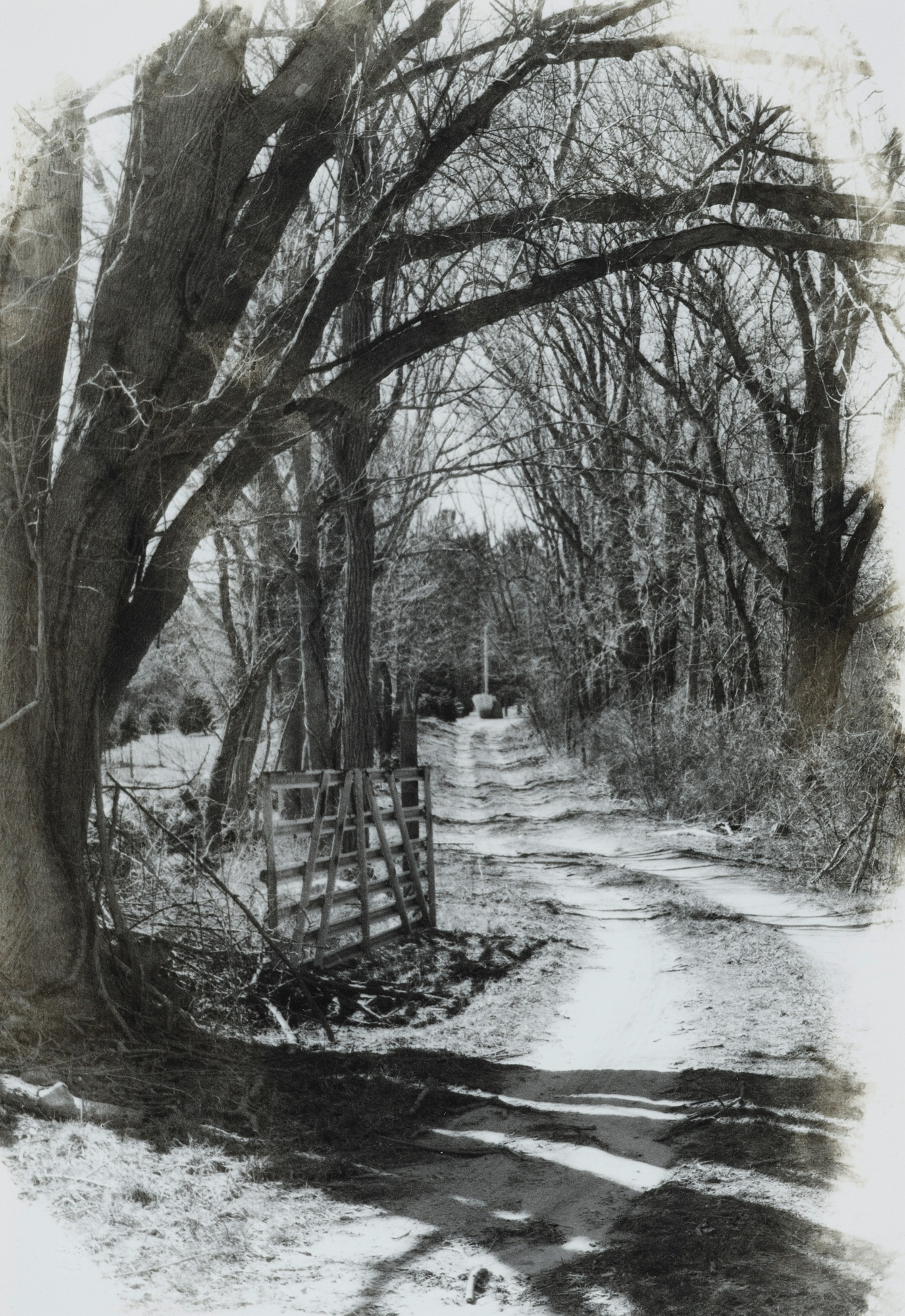 17. Bo Kass, Wooded Path – Route 138